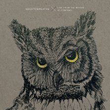Into the Woods - NEEDTOBREATHE
